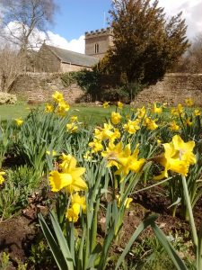 St Peters Church from a garden with daffodils
